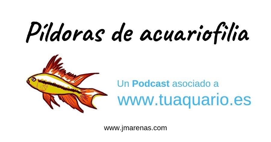 Píldoras de acuariofilia. Un podcast sobre acuarios